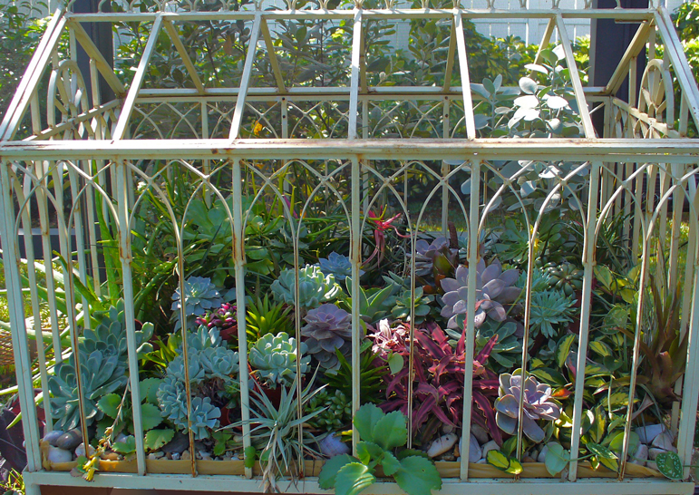 Swoon-worthy Terrariums | The Garden Fairies